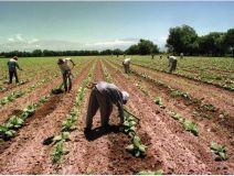 b_250_160_16777215_00_images_2014_j_imagen_ilustratuva_trabajadores_agrarios_temporarios_Custom.jpg