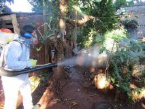 Operativo Integral de lucha contra el Dengue