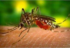 b_250_160_16777215_00_images_2016_b_Dengue-mosquito_CLAIMA20150324_4900_27-min.jpg