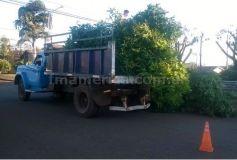 Foto (archivo): Uno de los camiones recolectores municipales