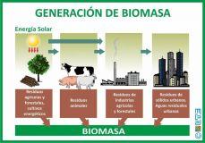 b_250_160_16777215_00_images_2016_e_reducido_Generacin_de_Biomasa_Parte_2-min.jpg
